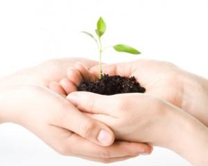 あなたの土台の苗は宝物。